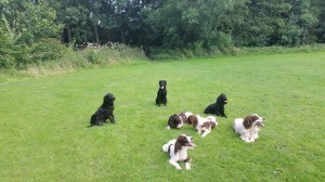 dog trainig in telford