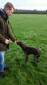 gun dog training telford
